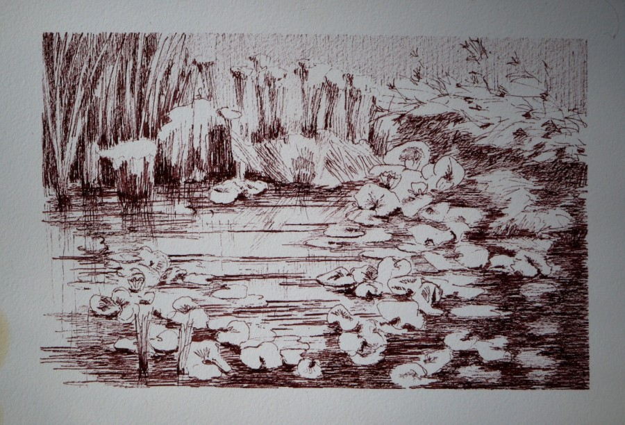 Mertola | Pond | Ink Drawing